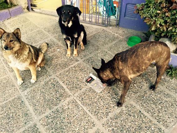 כלבי רחוב בארגנטינה