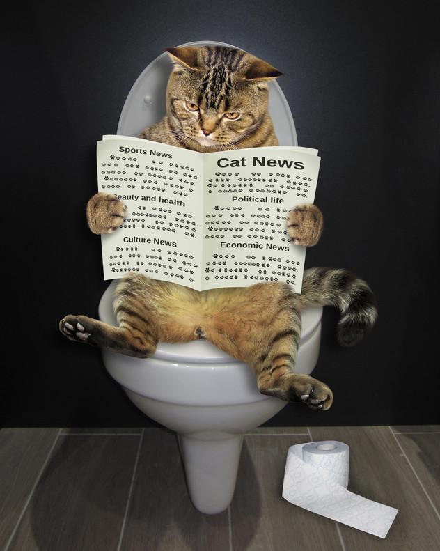 מחלות דרכי השתן אצל חתולים