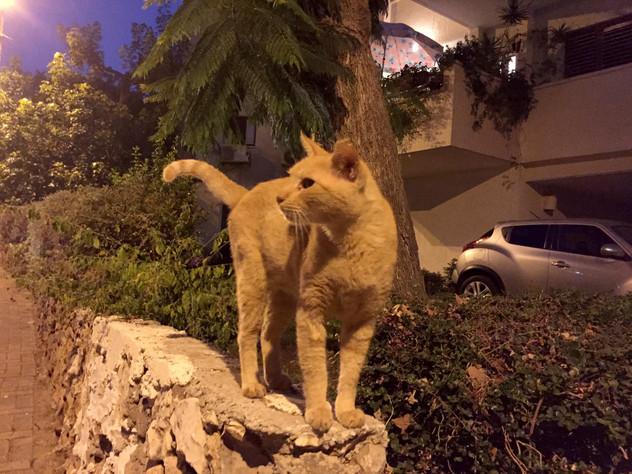 גורי חתולים נטושים