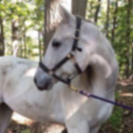 horseback riding trail riding therapeutic horseback riding