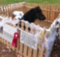 mookie the mini miniature horse events birthday parties horseback riding central new jersey