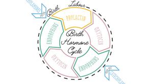 Part I: Birth hormones—the quiet, unsung heroes