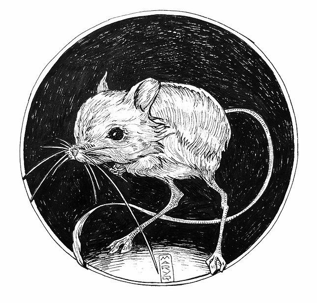 6_Rodent_Behance.jpg