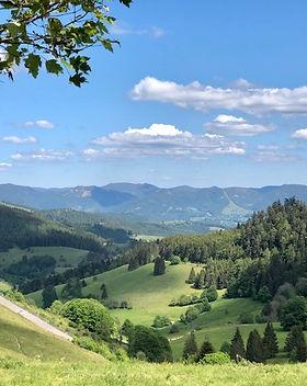 Blick ins Münstertal