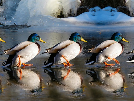 Get your ducks in a row. Be realistic about your business' assets and overhead expenses