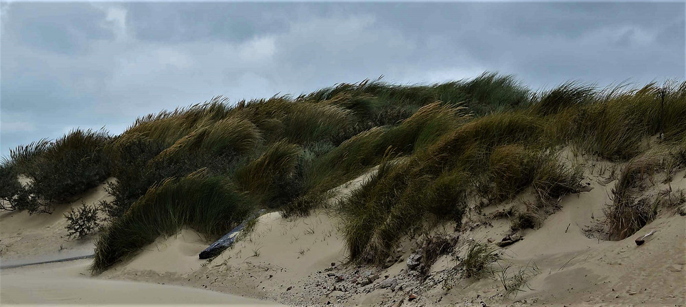 wind blowing in the dunes