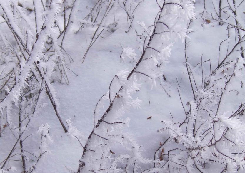071226 27 White (snow).jpg