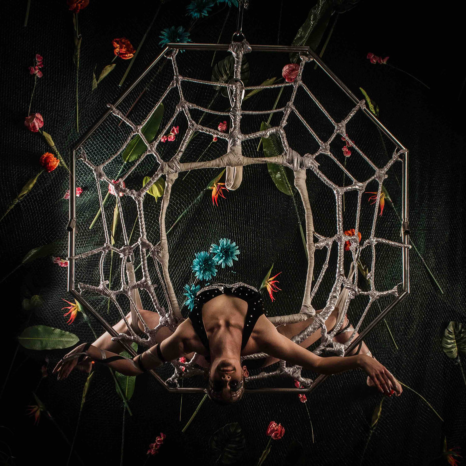 Amazon spider.jpg