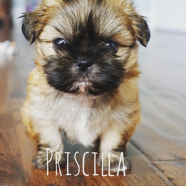 Click to see more pics of Priscilla!