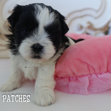 Click to see more pics of Patches!