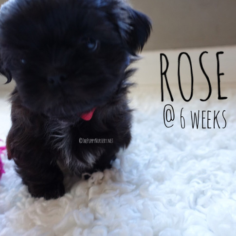 click to see Rose's full photo album