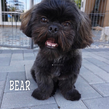 Click to see more pics of Bear!