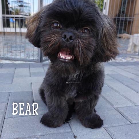 Click to see more pics of Bear!