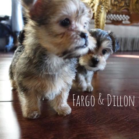 Click to see more pics of Fargo & Dillon!