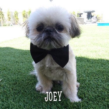 Click to see more pics of Joey!
