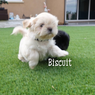Click to see more pics of Biscuit!
