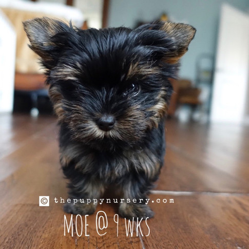 Click to see more pics of Moe!