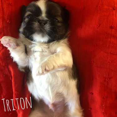 Click to see more pics of Triton!