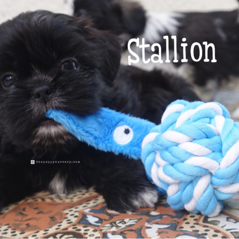 Click to see more pics of Stallion!