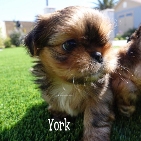 Click to see more pics of York!