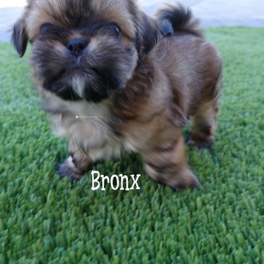 Click to see more pics of Bronx!