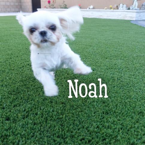 Click to see more pics of Noah!