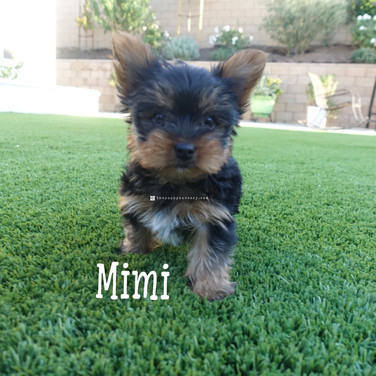 Click to see more pics of Mimi
