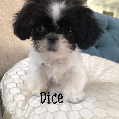 Click to see more pics of Dice!