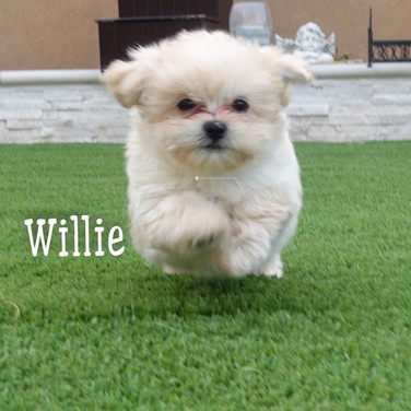 Click to see more pics of Willie!