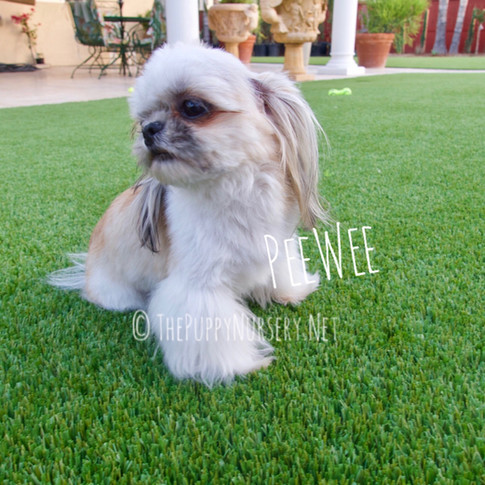 Click to see more of PeeWee!
