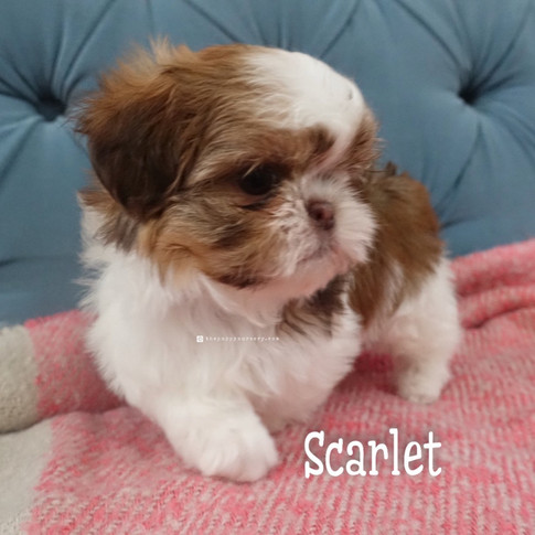Click to see more pics of Scarlet!
