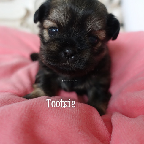 Click to see more pics of Tootsie!
