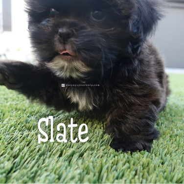 Click to see more pics of Slate!