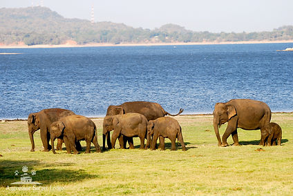 Sri Lanka 4.jpg