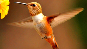 A Lesson from the Hummingbird