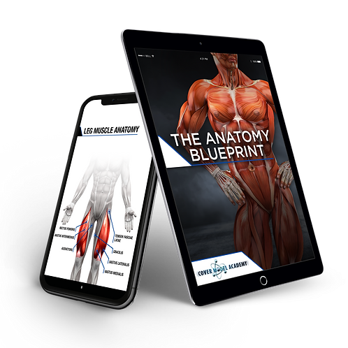 The Cover Model - Anatomy Blueprint (Was £55)