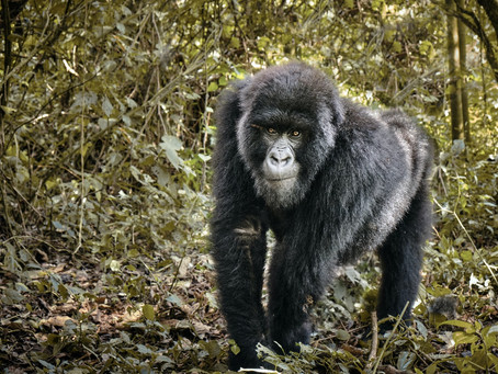 THE DEMOCRATIC REPUBLIC OF CONGO AND THE TRAGEDY OF COLONIALISM ON TOURISM