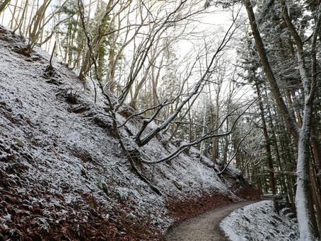 SNOW MONKEY FOREST (NAGANO, JAPAN)