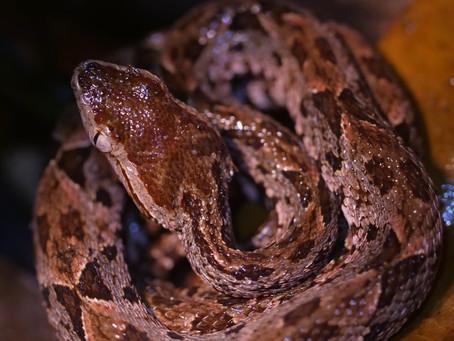 10 DEADLIEST ANIMALS IN COSTA RICA