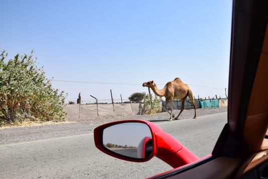 Fujairah_Mountain_Escape_Impression.JPG