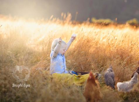 toddler-chickens-sunset-session-farm.jpg