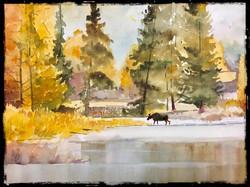 Moose crossing wyoming