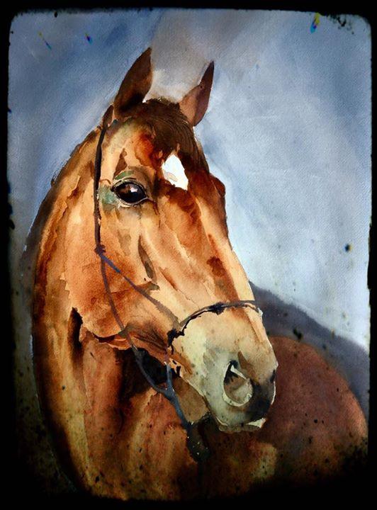 Stallion (sold)