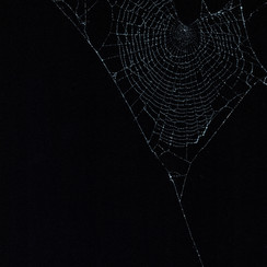 Entanglement 12  monoprint on black paper made directly from a spiders web, 29.7x42cm