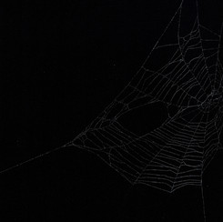Entanglement 3  monoprint on black paper made directly from a spiders web, 29.7x42cm