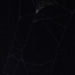 Entanglement 18  monoprint on black paper made directly from a spiders web, 29.7x42cm