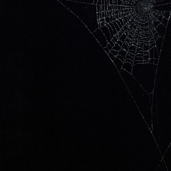 Entanglement 41  monoprint on black paper made directly from a spiders web, 29.7x42cm