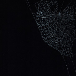 Entanglement 38  monoprint on black paper made directly from a spiders web, 29.7x42cm