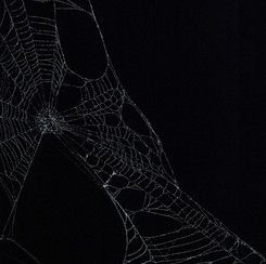 Entanglement 19  monoprint on black paper made directly from a spiders web, 29.7x42cm
