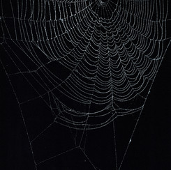 Entanglement 23  monoprint on black paper made directly from a spiders web, 29.7x42cm